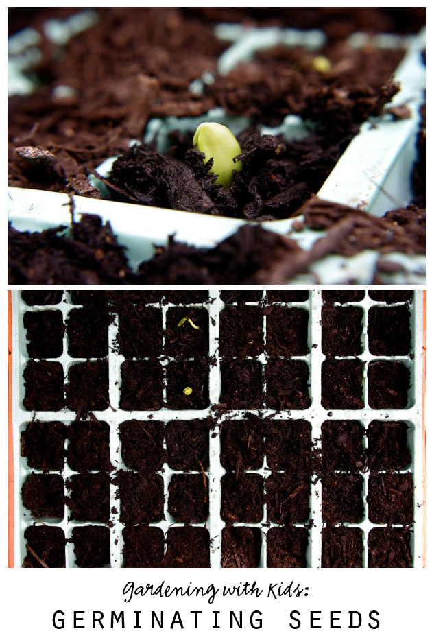Gardening with Kids: Germinating Seeds