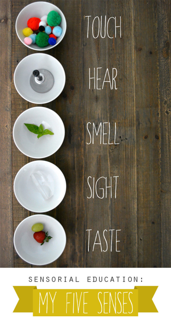 Sensorial Education: My Five Senses (+ printable)