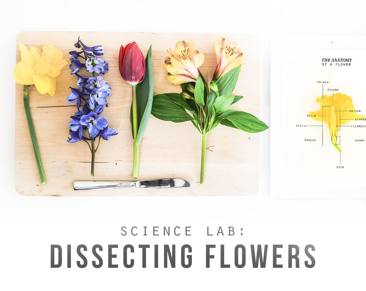 Science Lab: Dissecting Flowers – Playful Learning